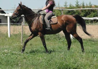 oboz-konie-2015-6-0106