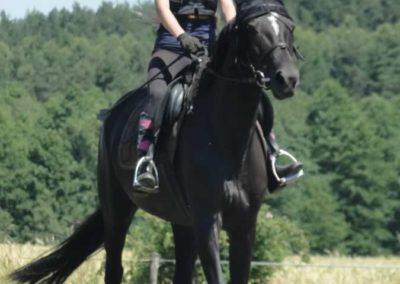 oboz-konie-2015-6-0109