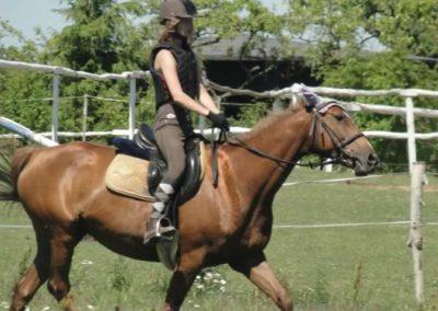 oboz-konie-2015-6-0112