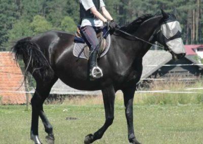 oboz-konie-2015-6-0113