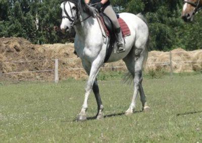 oboz-konie-2015-6-0115