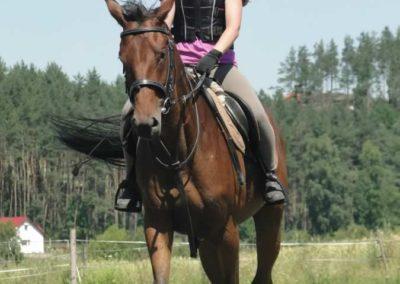 oboz-konie-2015-6-0117