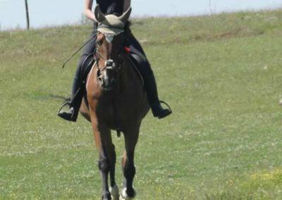 oboz-konie-2015-6-0122