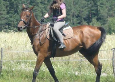 oboz-konie-2015-6-0127