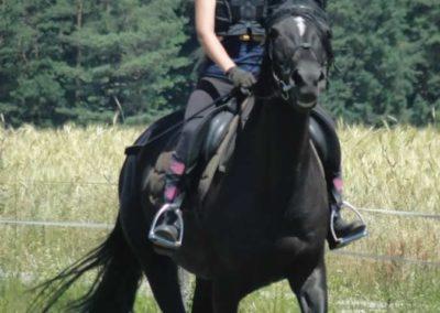 oboz-konie-2015-6-0129