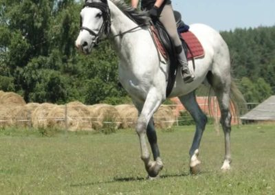 oboz-konie-2015-6-0130