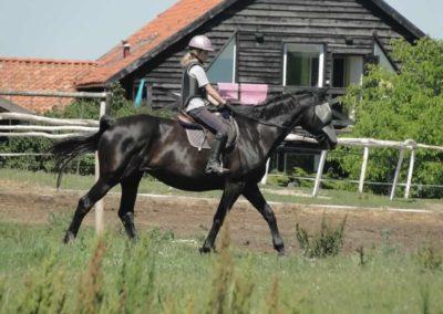 oboz-konie-2015-6-0133