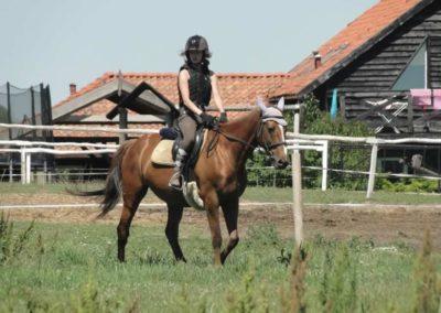 oboz-konie-2015-6-0135