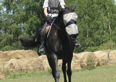 oboz-konie-2015-6-0138