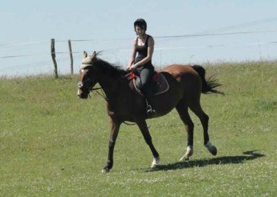 oboz-konie-2015-6-0140