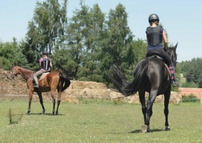 oboz-konie-2015-6-0144