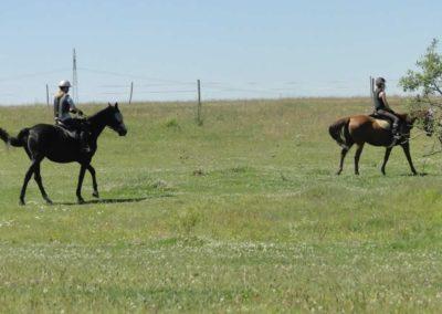 oboz-konie-2015-6-0146