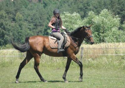 oboz-konie-2015-6-0151