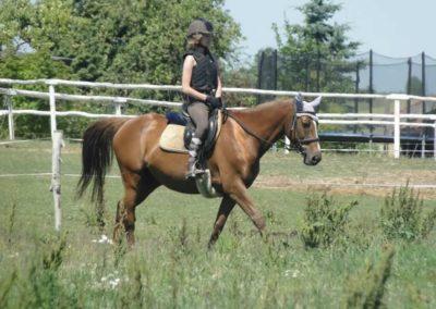 oboz-konie-2015-6-0152