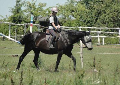 oboz-konie-2015-6-0153