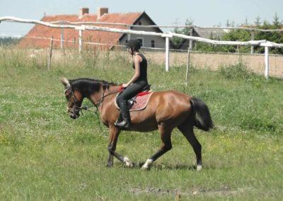 oboz-konie-2015-6-0158