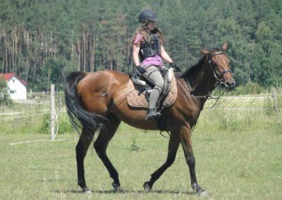 oboz-konie-2015-6-0162