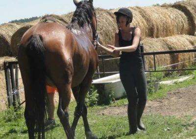 oboz-konie-2015-6-0165
