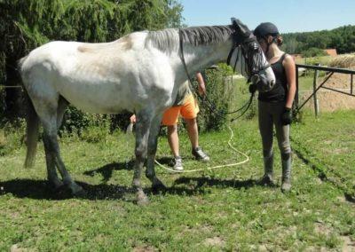 oboz-konie-2015-6-0166
