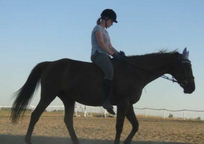 oboz-konie-2015-6-0173