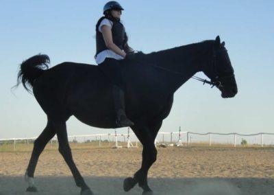 oboz-konie-2015-6-0175