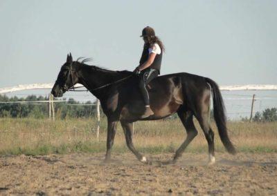 oboz-konie-2015-6-0177
