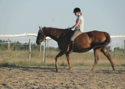 oboz-konie-2015-6-0178