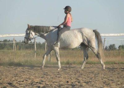 oboz-konie-2015-6-0180
