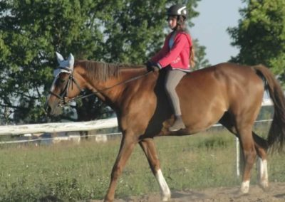 oboz-konie-2015-6-0183
