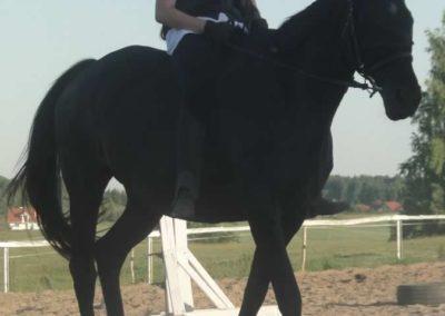 oboz-konie-2015-6-0188
