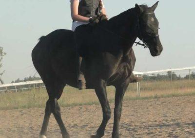 oboz-konie-2015-6-0196