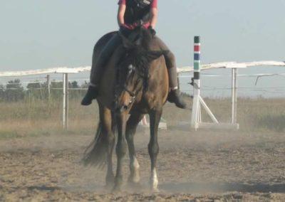 oboz-konie-2015-6-0198