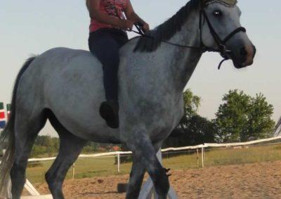 oboz-konie-2015-6-0202