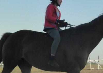 oboz-konie-2015-6-0213