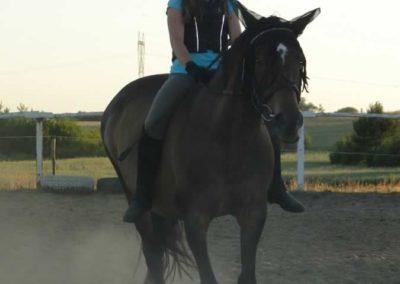 oboz-konie-2015-6-0215