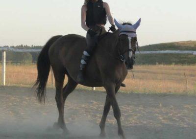 oboz-konie-2015-6-0220