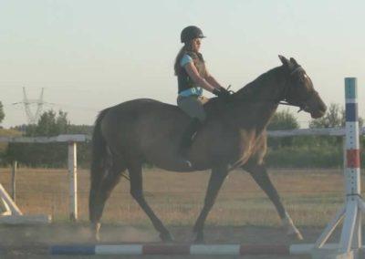 oboz-konie-2015-6-0223