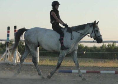 oboz-konie-2015-6-0224
