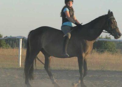 oboz-konie-2015-6-0228