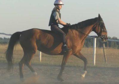 oboz-konie-2015-6-0231