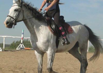 oboz-konie-2015-7-0001