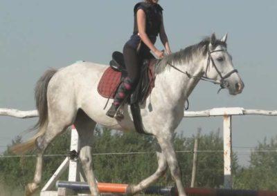 oboz-konie-2015-7-0007