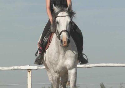 oboz-konie-2015-7-0008