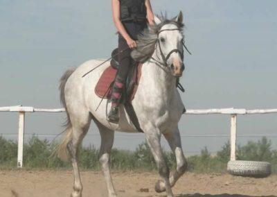 oboz-konie-2015-7-0009