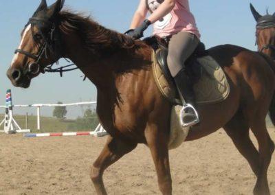 oboz-konie-2015-7-0011