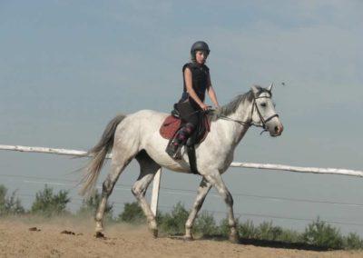 oboz-konie-2015-7-0012