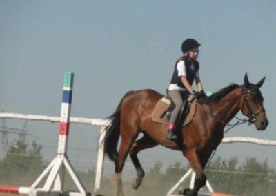 oboz-konie-2015-7-0014
