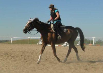oboz-konie-2015-7-0015