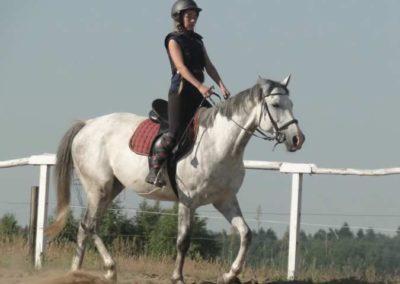 oboz-konie-2015-7-0016