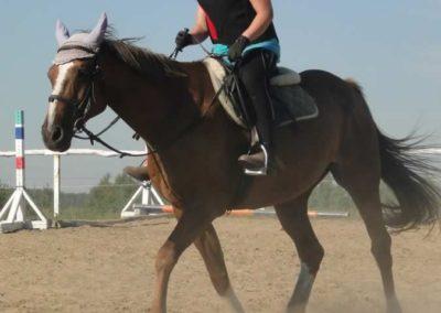 oboz-konie-2015-7-0019